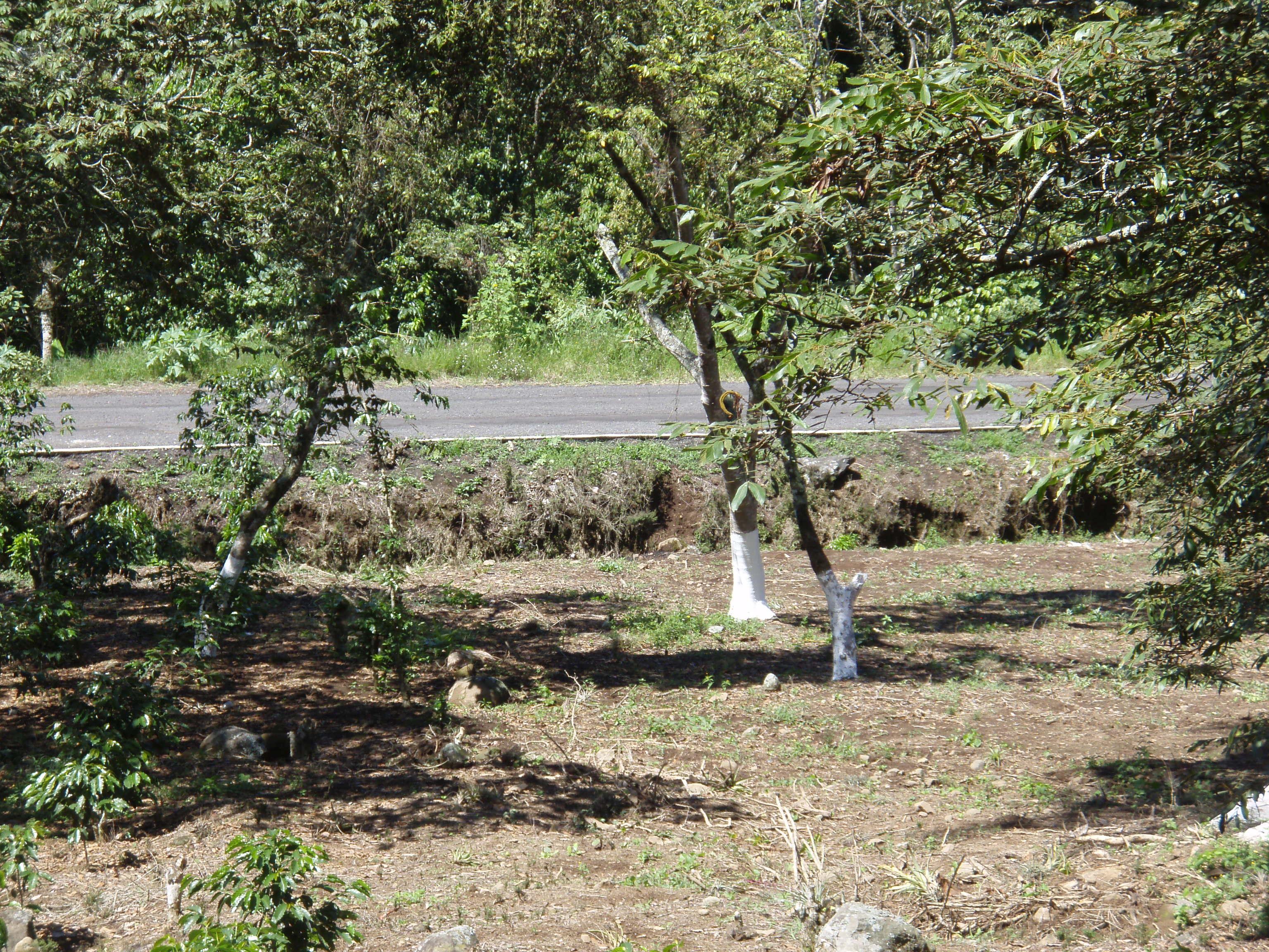 VENTA TERRENO CAMPESTRE 1,000 M2 SAN MARCOS-XICO TLALCONTLA CON ARROYITO AL FRENTE